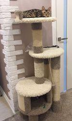 """Комплекс для кошек """"Тэфи"""""""