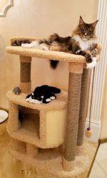"""Комплекс для кошек """"Зара"""""""